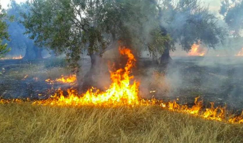 Πυρκαγιά στον Πλάτανος Μαγνησίας