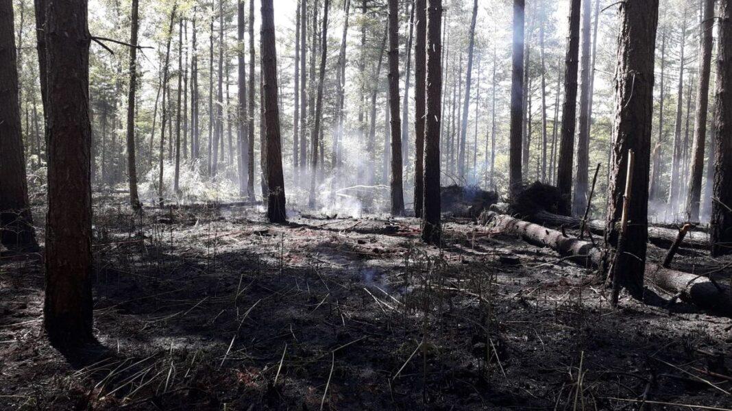 Πυρκαγιά στο δάσος των Βρυξελλών