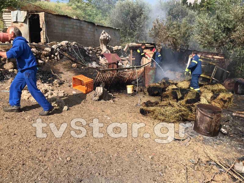 Πυρκαγιά σε μαντρί στη Δαύλεια Βοιωτίας
