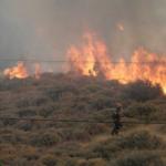 26 Δασικές πυρκαγιές εκδηλώθηκαν σε όλη την χώρα
