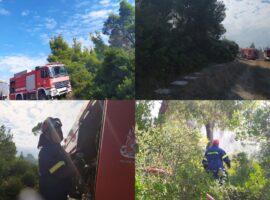 Πυρκαγιά στη Σάνη Χαλκιδικής – Άμεση επέμβαση της πυροσβεστικής