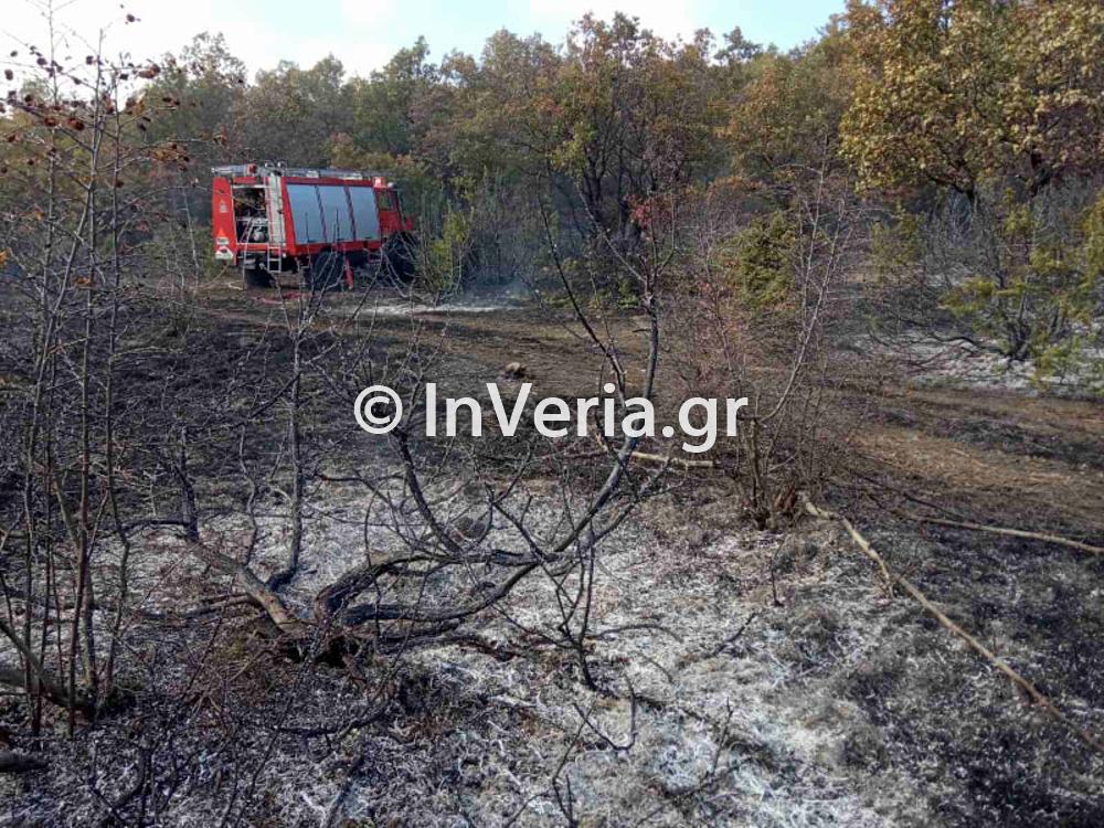 πυρκαγια Φυτεια Ημαθιας 10 11 2020 2