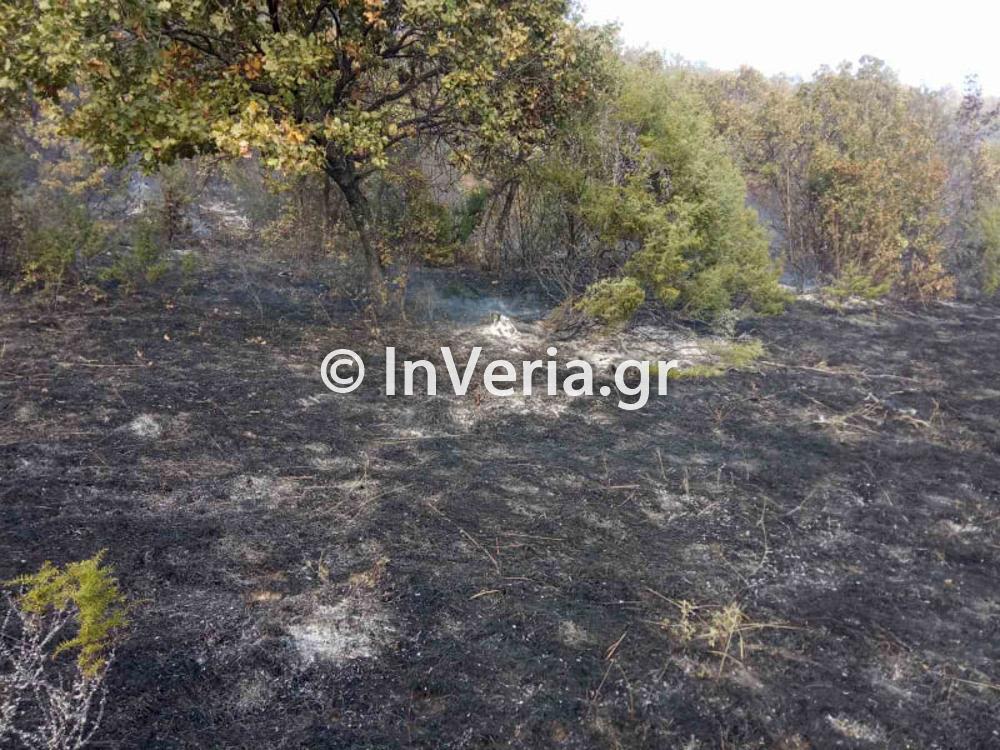 πυρκαγια Φυτεια Ημαθιας 10 11 2020 3