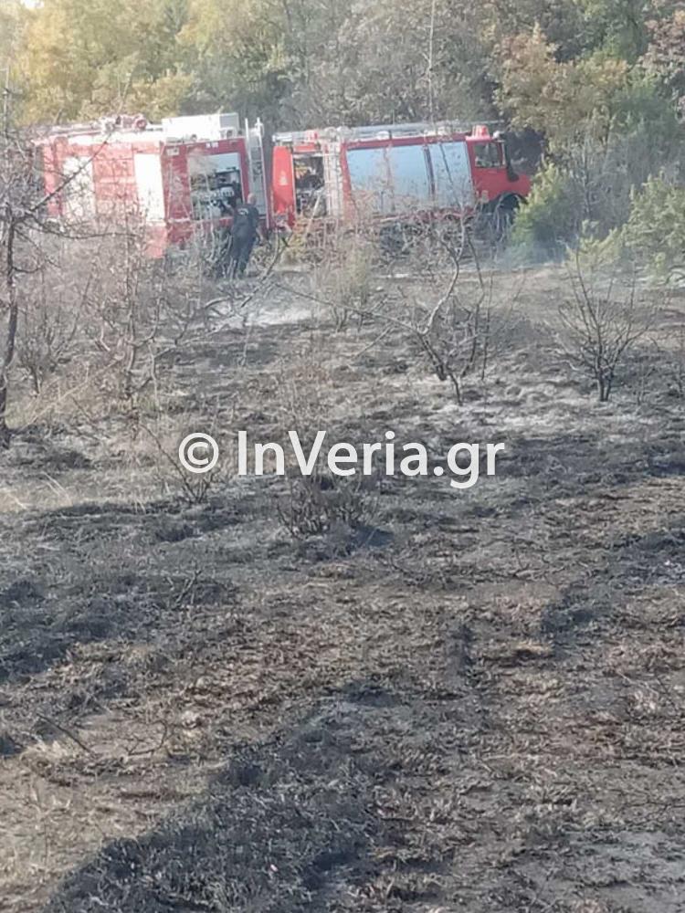 πυρκαγια Φυτεια Ημαθιας 10 11 2020 5