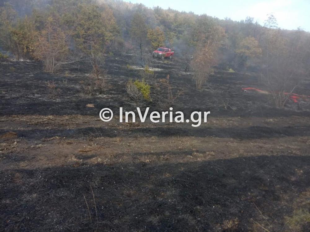 πυρκαγια Φυτεια Ημαθιας 10 11 2020 6