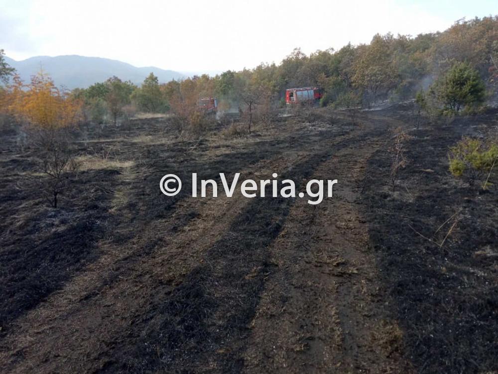 πυρκαγια Φυτεια Ημαθιας 10 11 2020 7