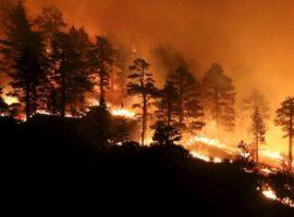 Πυροσβεστική: 30 δασικές πυρκαγιές το τελευταίο 24ωρο