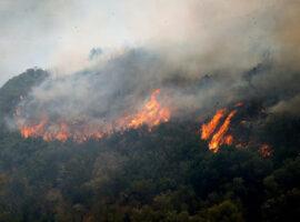 Πυροσβεστική: 12 δασικές πυρκαγιές το τελευταίο 24ωρο