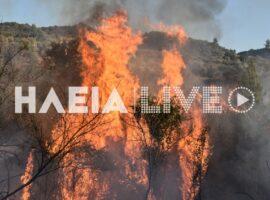 Χειμαδιό Ηλείας: Δύσκολη πυρκαγιά για την Πυροσβεστική, έκαψε 15 στρέμματα