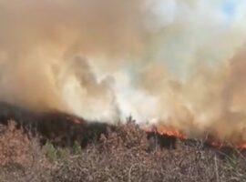 Με φλόγες και ανέμους μάχονται οι πυροσβέστες σε Μεγαλόπολη, Αίγιο και Καρπενήσι.