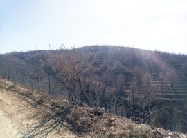 Η επόμενη μέρα της πυρκαγιάς στο Κεραστάρι