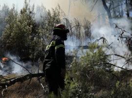 Πράσινο Πύργου: Μικρή πυρκαγιά σε δασική έκταση