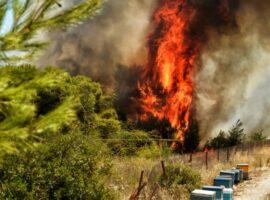 56 Δασικές πυρκαγιές το τελευταίο 24ωρο