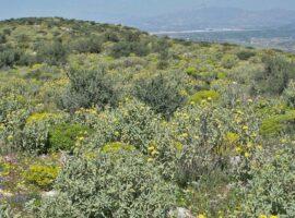 Δασικοί χάρτες – Σκρέκας: Βγαίνουν από τις δασικές εκτάσεις οι ασπάλαθοι και τα φρύγανα
