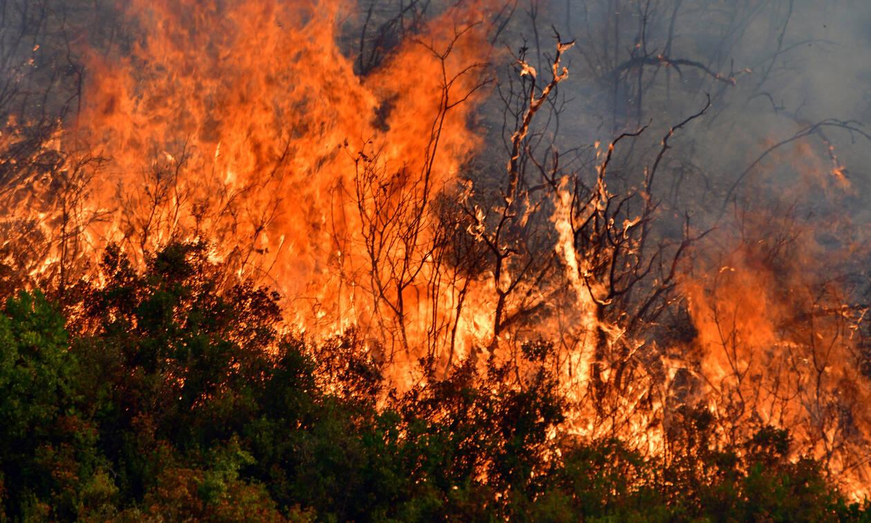 Πυρκαγιά στα Σπάτα Αττικής