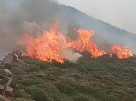 Πυρκαγιά ΤΩΡΑ σε δασική έκταση στο Πευκόφυτο Αττικής