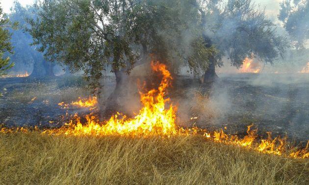Πυρκαγιά ΤΩΡΑ εν υπαίθρω στην Αίγινα