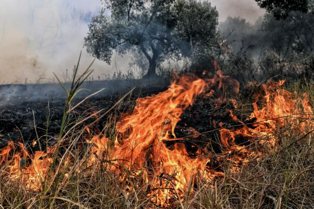 Πυρκαγιά σε ξηρά χόρτα στο δρόμο Λάρισας-Συκουρίου