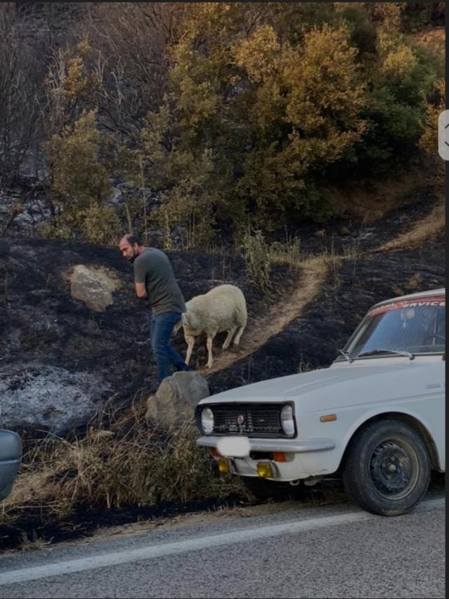 Δείτε τους βοσκούς να σώζουν τα ζώα τους από τη πυρκαγιά στη Βίτωλη