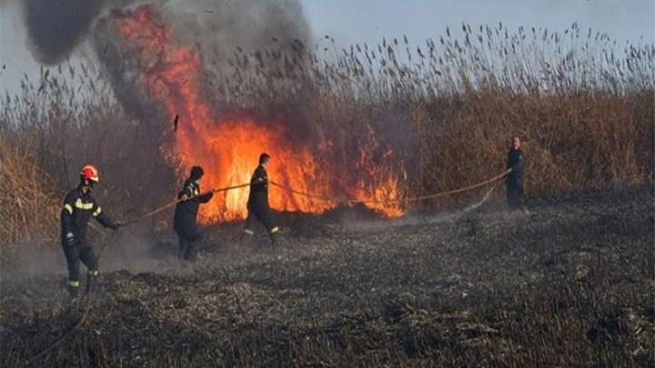 Ηλεία-Πυρκαγιά ΤΩΡΑ σε εξέλιξη σε Καλάμια.