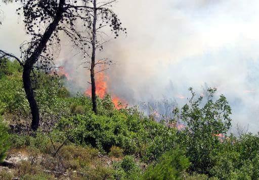 Πυρκαγιά σε χορτολιβαδική έκταση στην Κω