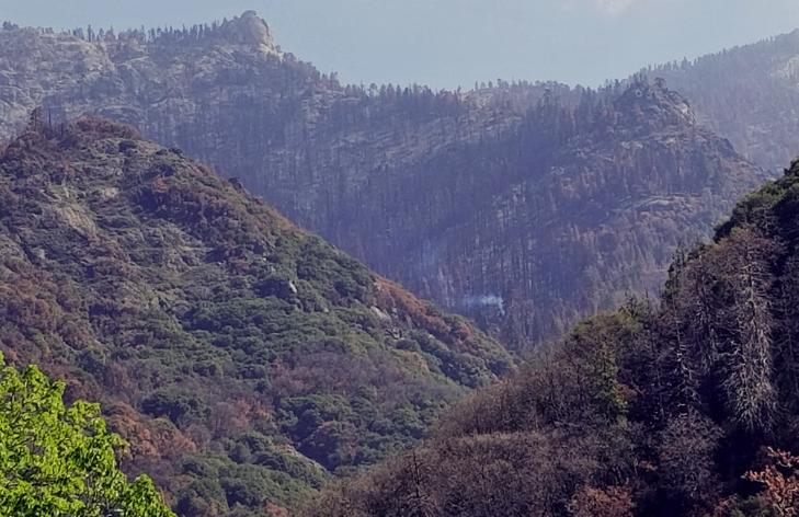 ΗΠΑ: Γιγάντιο δέντρο σιγοκαίγεται από το καλοκαίρι του 2020