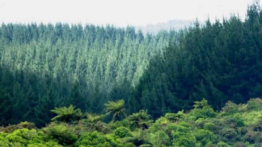 ΥΠΕΝ: 79 εκατ. ευρώ για πρόληψη και αποκατάσταση ζημιών σε δάση