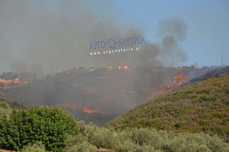 Πυρκαγιά ΤΩΡΑ στην Αμυγδαλίτσα Αργολίδας