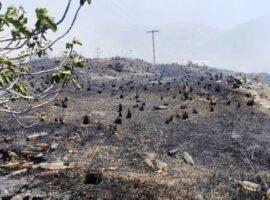 Πυρκαγιά στην περιοχή Βήσσα στη Σύρο