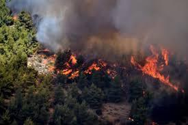 Ηλεια-Δασική πυρκαγιά στην περιοχή Ωλένης