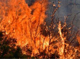 Πυρκαγιά ΤΩΡΑ εν υπαίθρω στην Ροδόπη
