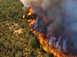 Πυρκαγιά ΤΩΡΑ σε Δασική έκταση στην περιοχή καρίτσα Θεσσαλίας