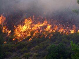 34 Δασικές πυρκαγιές το τελευταίο 24ωρο