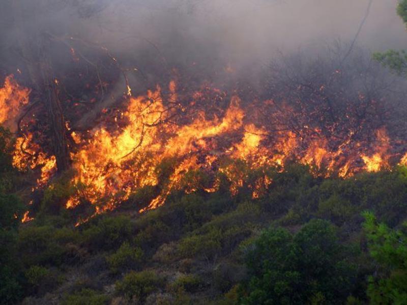 Πυρκαγιά σε ξηρά χόρτα στην Κλένια Κορινθίας