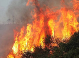 Πυρκαγιά εν υπαίθρω σε εξέλιξη στον Δήμο Ωρωπού-Αυλώνα