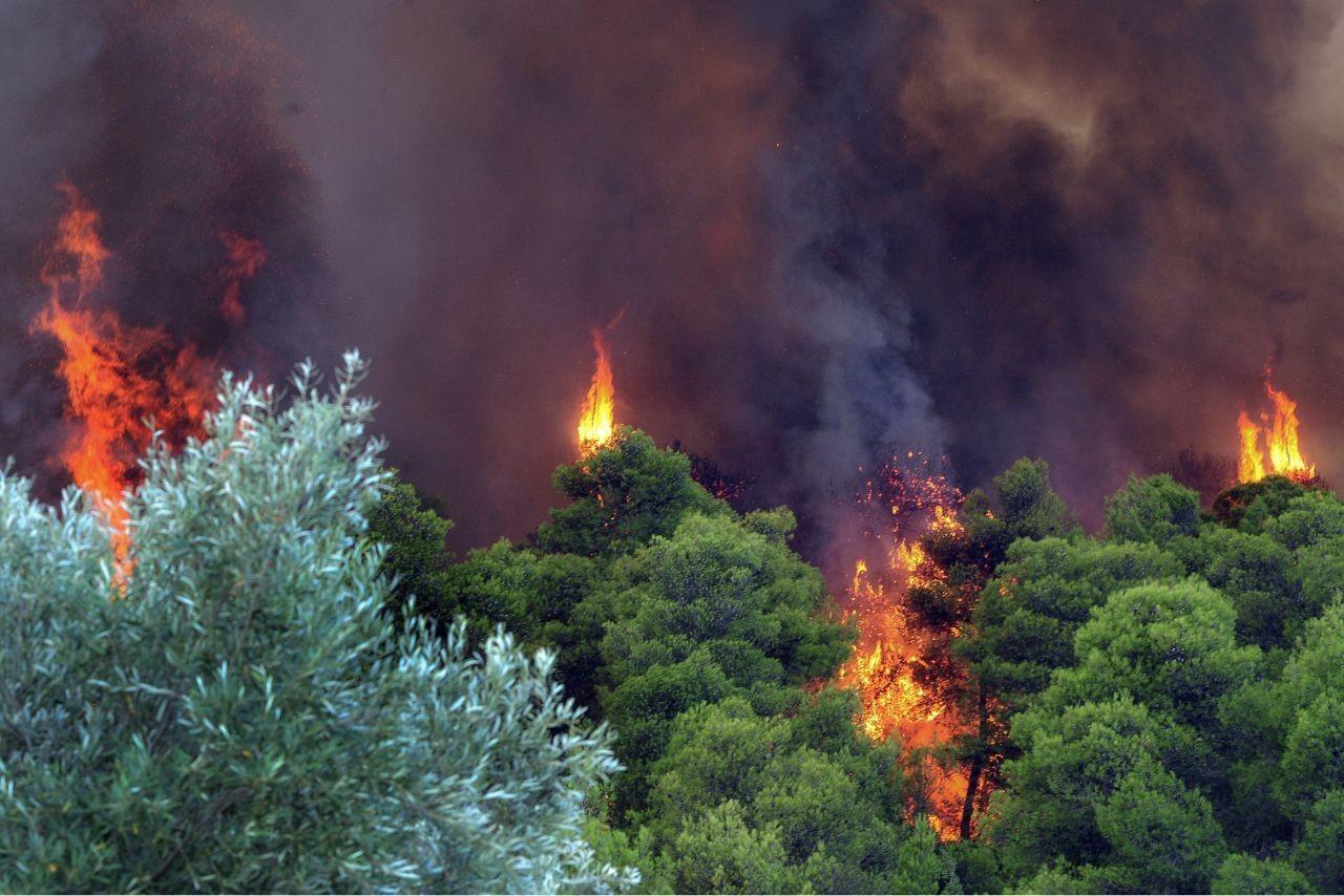 Δασική πυρκαγιά ΤΩΡΑ στην περιοχή Αργοστόλι Κεφαλονιάς