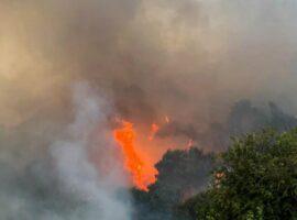 Πυρκαγιά σε εξέλιξη σε Δασική έκταση στην Καλαμπάκα