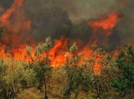 Δασική πυρκαγιά στην περιοχή Αβιάς στην Μάνη