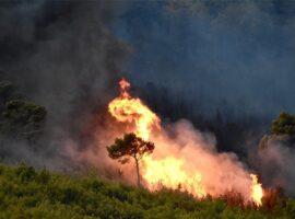 Πυρκαγιά ΤΩΡΑ σε δασική έκταση στην Κυανή Ακτή Ηλείας