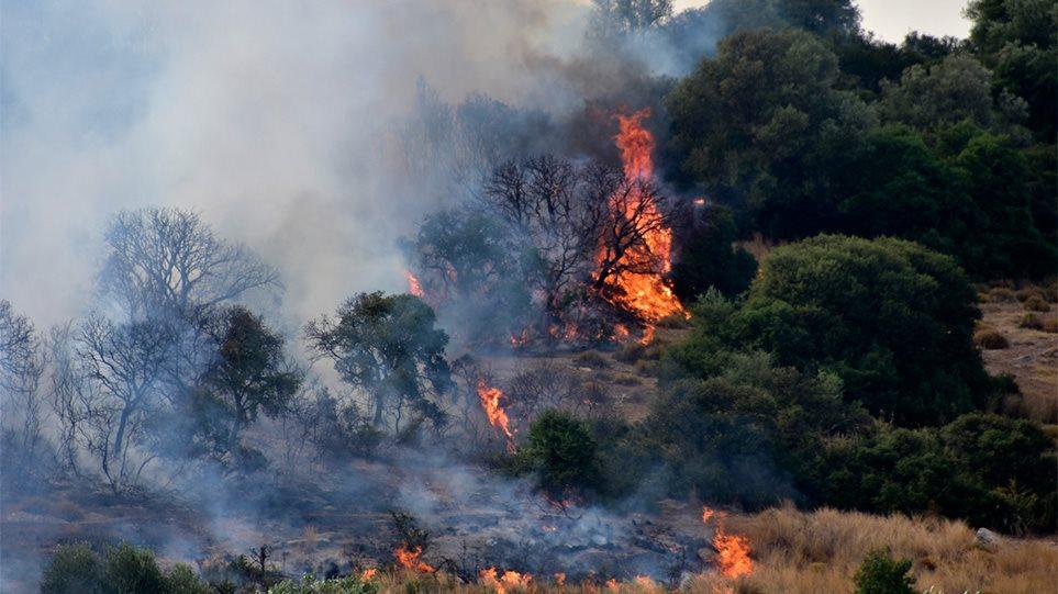 Δασική πυρκαγιά σε εξέλιξη στο Διρφυ Ευβοίας