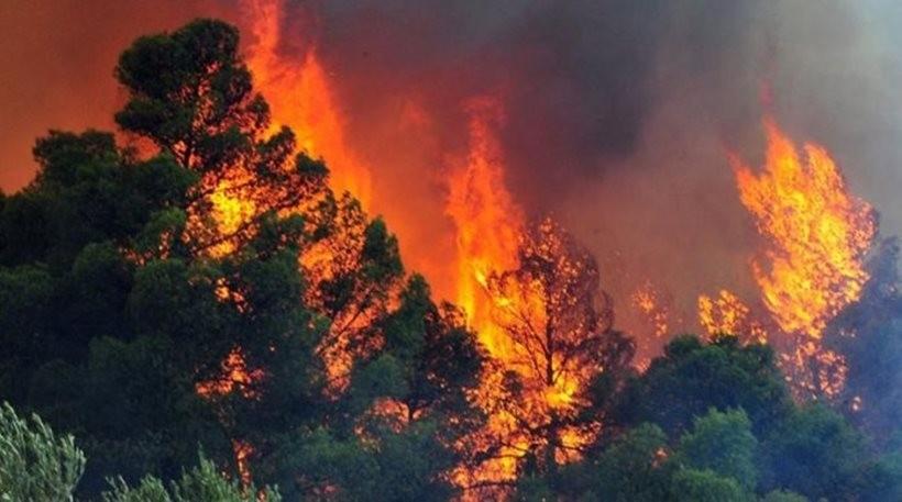 Πυρκαγιά σε Δασική έκταση ΤΩΡΑ στην Σπάρτη