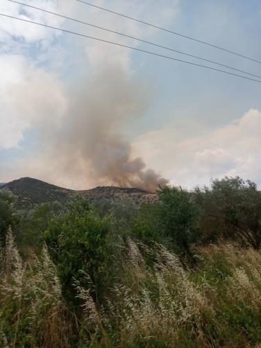 Πυρκαγιά σε χορτολιβαδική έκταση στην περιοχή Πουρνάρι Λάρισας