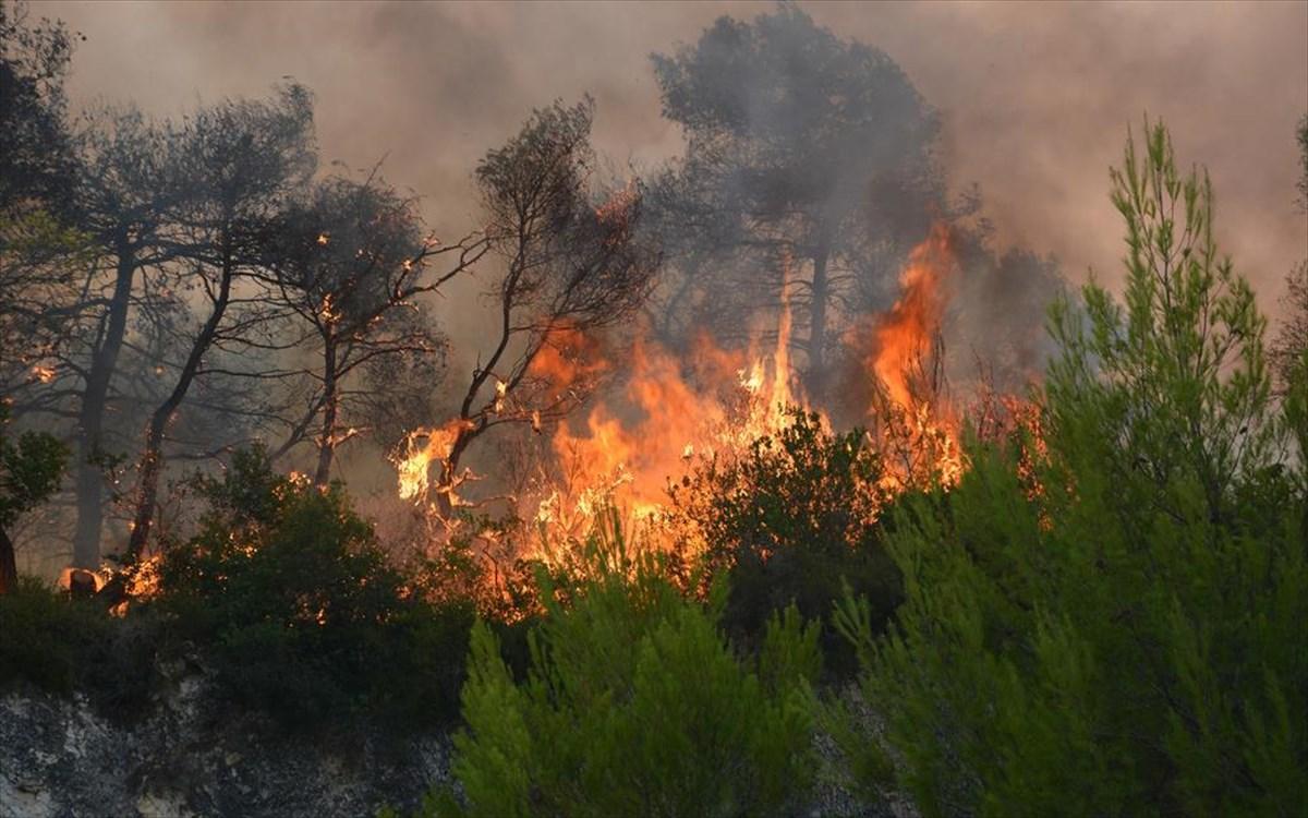 35 Δασικές πυρκαγιές το τελευταίο 24ωρο