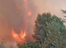 Πυρκαγιά ΤΩΡΑ σε δασική έκταση πλησίον της Κυανής Ακτής του νομού Ηλείας.