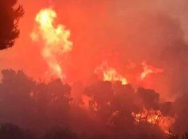 Έκτακτο- Δασική πυρκαγιά ΤΩΡΑ στην Γαστούνη Ηλείας