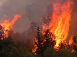 Πυρκαγιά ΤΩΡΑ σε χορτολιβαδική έκταση στην περιοχή Αργυρά στην Αχαΐα