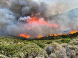 Πυρκαγιά ΤΩΡΑ στον Λόφο Αράπη στον Βύρωνα Αττικής