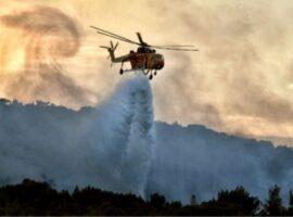 3.300 στρέμματα δάσους και ελαιώνων κάηκαν από τις δύο τελευταίες πυρκαγιές σε Καλέτζι και Άνω Αλμυρή