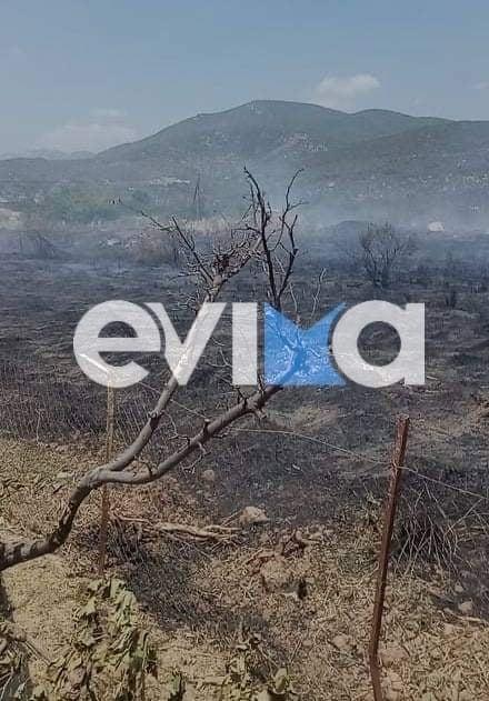 Πυρκαγιά σε χορτολιβαδική έκταση στα Πολιτικά Ευβοίας