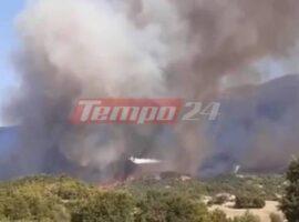 Πυρκαγιά στην Αχαΐα: Σε πύρινο κλοιό η Δροσιά – Μαίνεται το μέτωπο (Βίντεο)